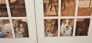 While I was making lunch, I checked on the puppies. I will miss these glass doors.