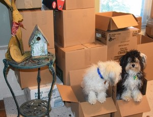 Max: Mom can't mean to pack us in the boxes.