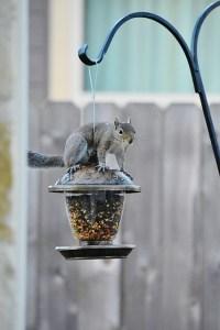 baby squirrel (427x640)