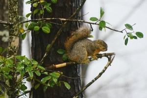 wet squirrel 001 (640x427)