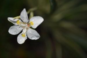 butterfly iris 002 (640x427)