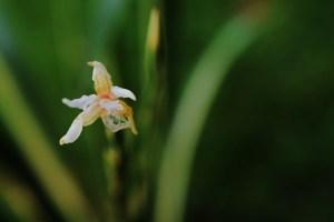 butterfly iris(640x427)