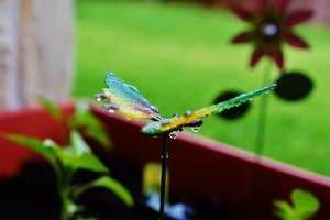 metal dragonfly with water droplets(640x427)