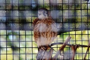 owl (2) (800x533)