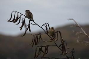 2 birds on shrub 900x600
