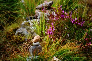 cairns purple heather (800x533)