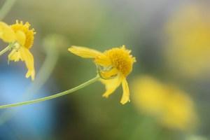 macro orange mushroom and yellow flower 007 (900x600)
