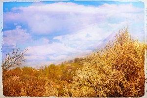 tree image Alex Markovich sun rays, no green on background, lightened foreground