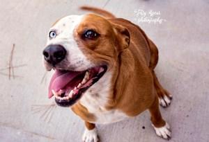 neighors-dog-maya-blue-eye-brown-eye-900-015