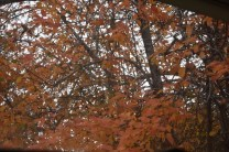pear-tree-in-fall-colors-012-640x427