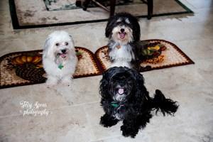 puppies-in-kitchen-900