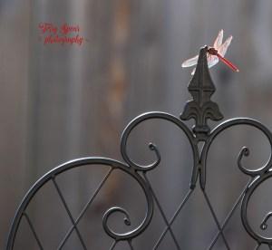 red-dragonlfy-outside-on-tripod