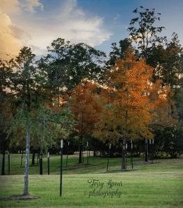 fall-cypress-sunsetting-900-022