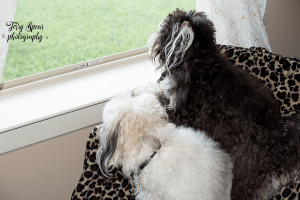 puppies-looking-out-window-in-cold-900-001