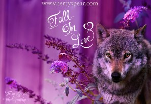 skipper-brown-butterfly-purple-days-purple-wolf-fall-in-love-024