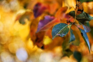 fall-leaves-001-640x427