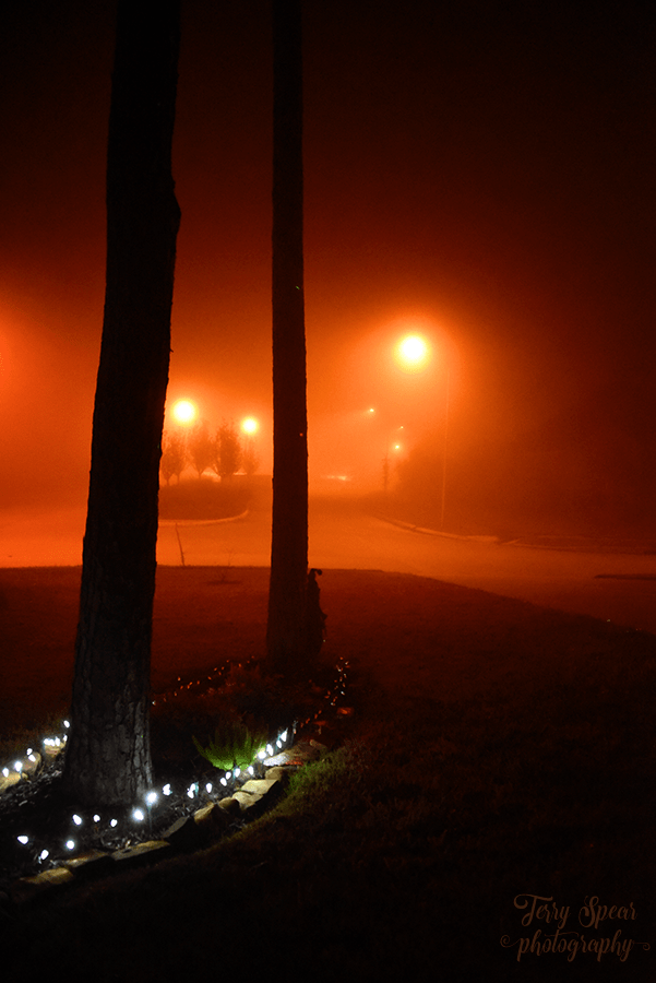 christmas-lights-fog-900-010