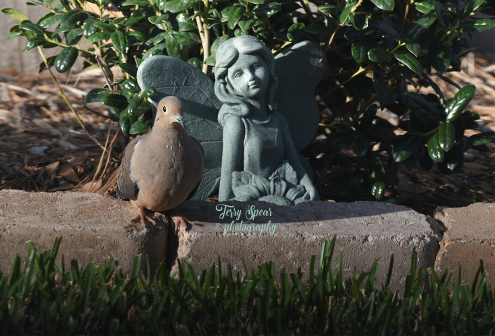 dove-and-fairy-900-rule-of-thirds-089