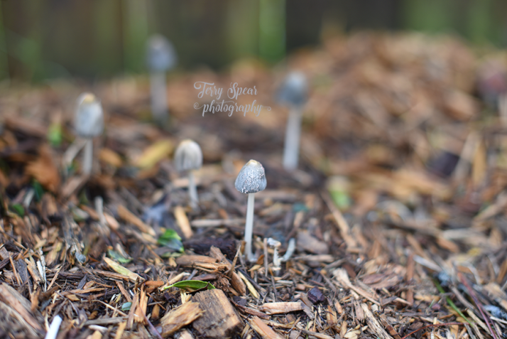 mushroom-that-stands-alone-900-_8550