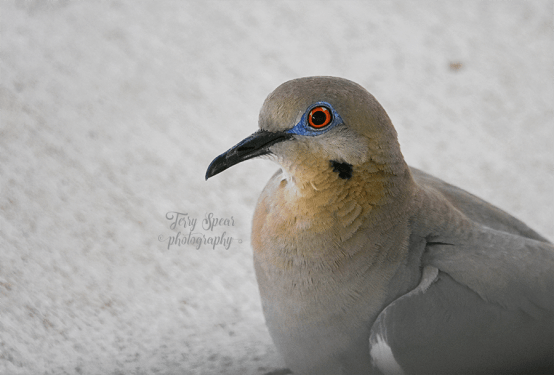 closeup-dove-900-036
