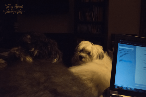 puppies during storm 900 006