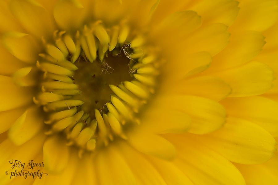 yellow flower 900_9463