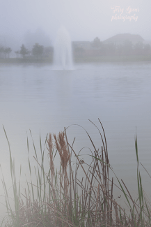 fog and fountains and wild grass 900 024