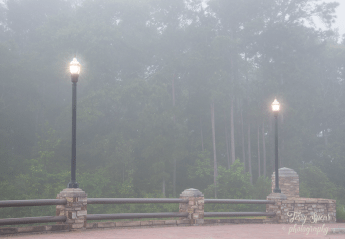 fog and lamps 900 094