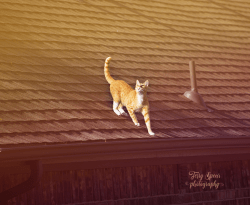 tabby cat on roof 900 010