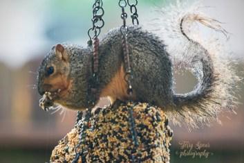 wet baby squirrel 900 054