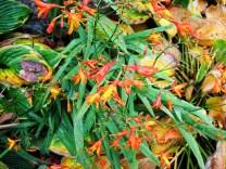 crathes orange flowers (640x480)