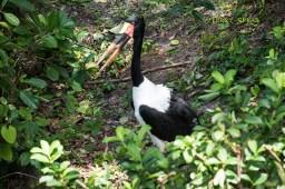 Orlando Disney 900 black and white bird RWA 2017 2465
