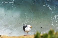 Seagull ocean behind him 900 San Diego 3831