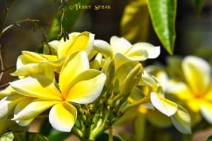 yellow flowers 900 San Diego 1305
