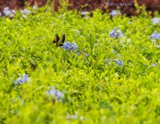 butterly on purple flowers 900 Orlando Disney RWA 2017 3550