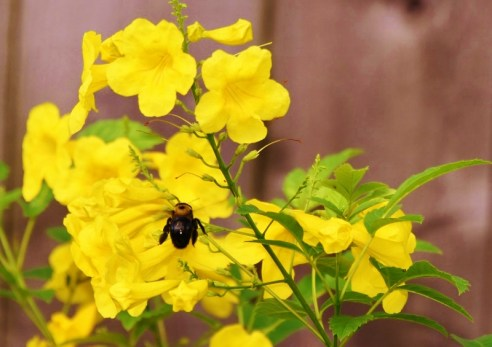 closeup bee, esperanza, tripod, remote control 042 (800x565)