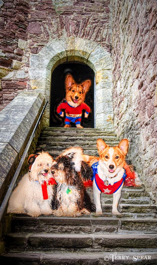 Halloween dogs 900 castle 041