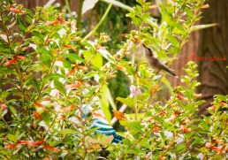 hummingbird feeeding from flower 900 078