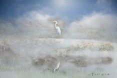great white heron added sky and heavy fog 900