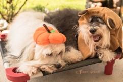 Max pumpkin on head, Tanner Ewok 900 DSC_4201