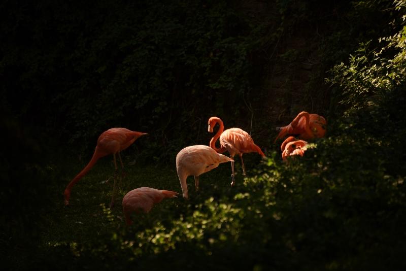 flamingos in shadows DSC_6686 (800x534)