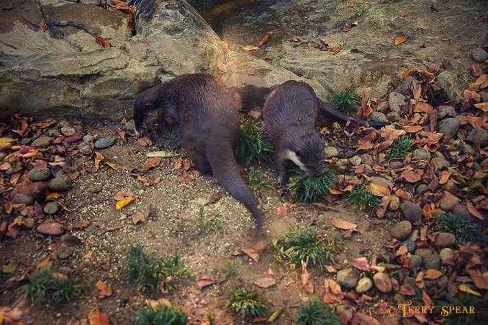 2 river otters1 900 1494