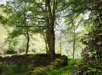 ancient moss-covered dyke wall 900 Scotland 2015 September 2302