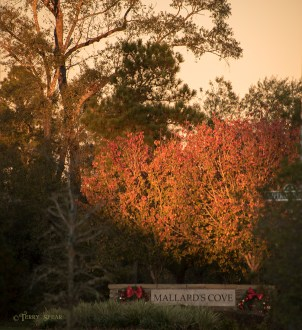 Fall colors and sunset 1000 001