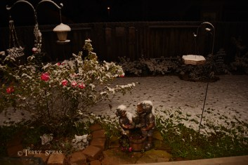 Snow in Spring fountain roses 900 004