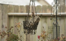 freezing rain house wren 1000 6045