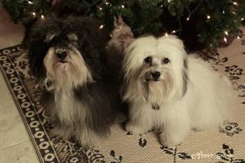 puppies christmas tree 1000 001