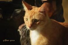 tabby cat on the hunt 1000 014
