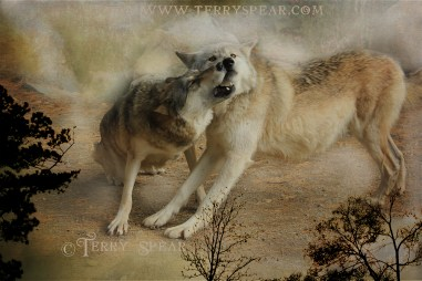 Wolves Playfighting