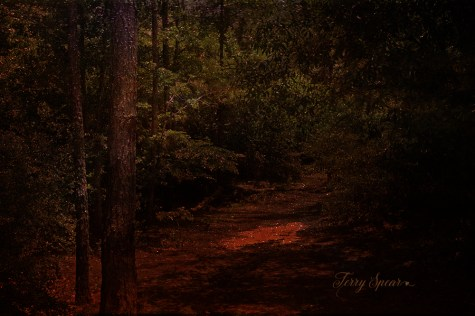 fantasy forest with clouds sunlight 1000 084-